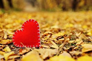 Фотографии Осень День святого Валентина Сердце Листья Боке Природа