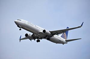 Фотография Боинг Самолеты Пассажирские Самолеты 737, United Airlines Авиация