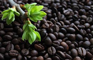 Картинка Кофе Ветвь Зерна Еда