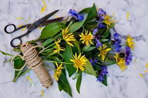 Фотография Васильки Букеты Ножницы Лепестки doronicum Цветы