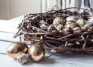 Обои Пасха Гнездо Яйцо