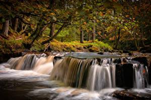 Обои Англия Осень Парки Водопады Дерево County Durham