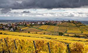Фотографии Франция Дома Поля Осенние Виноградник Riquewihr Города Природа