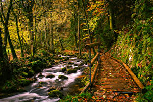 Фото Германия Осень Леса Камни Мост Ручей Мха Black Forest Природа
