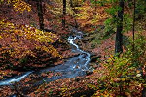 Обои Германия Дрезден Осень Парк Камень Листья Ручеек Ветки Природа