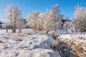 Фото Германия Зимние Речка Снега Деревьев Rheinland-Pfalz Природа