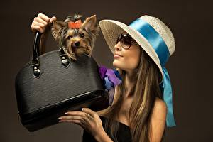 Обои для рабочего стола Сумка Собаки Йоркширский терьер Руки Шляпа Очков Цветной фон Девушки