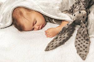 Картинка Зайцы Младенцы Спящий Дети
