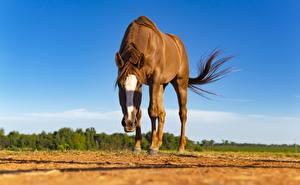 Фото Лошадь Взгляд Размытый фон