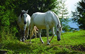 Фотографии Лошадь Трава Вдвоем Животные