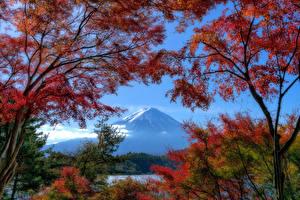 Фото Япония Горы Осень Фудзияма Дерево Ветвь Природа