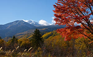 Картинки Япония Гора Осенние Ветка Ель Mount Norikura Природа