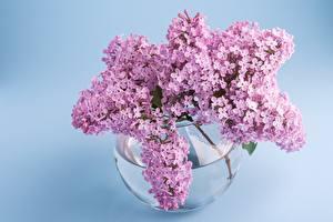 Картинки Сирень Букет Ветка Вазе цветок