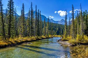 Обои Парк Леса Река Канада Джаспер парк Alberta Природа