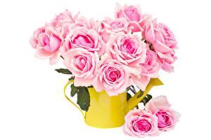 Картинка Розы Белым фоном Розовый цветок