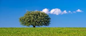 Картинка Небо Луга Дерево Облака Траве Природа
