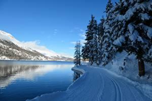 Картинка Швейцария Зима Гора Озеро Снеге Альпы Ели Lake Silvaplana Природа