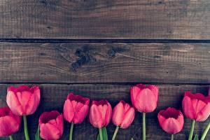 Фотографии Тюльпаны Доски Шаблон поздравительной открытки Красная