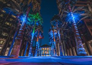 Фотографии США Дома Улиц Пальм В ночи Уличные фонари Midtown Phoenix, Arizona город