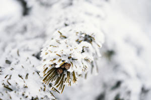 Картинки Зима Боке Снег Ветки Природа