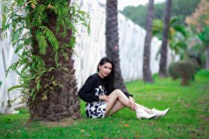 Картинка Азиатка Платья Ног Сидит Брюнетка Смотрит молодая женщина
