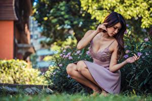 Фотография Азиатки Платье Поза Сидя Размытый фон молодые женщины