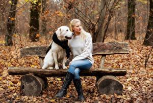 Фотографии Осенние Собаки Блондинка Скамья Листья Сидит Свитере Джинсов Laura молодые женщины Животные