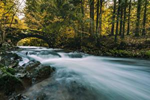 Фотографии Осень Речка Мост Лес Камень Дерево Мох Природа