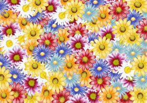 Картинки Маргаритка Рисованные Разноцветные Цветы