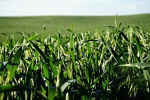 Фотография Размытый фон Траве Зеленых Природа