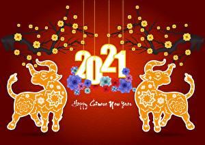 Картинка Новый год Бык 2021 Красный фон Текст Английский