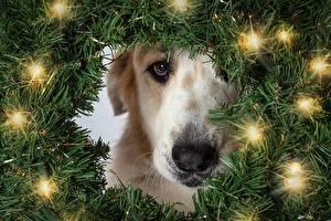Фото Новый год Собаки Электрическая гирлянда На ветке Взгляд Животные