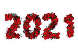 Картинка Рождество Роза 2021 Белый фон