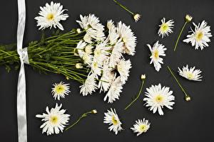 Фото Хризантемы Сером фоне Белых Лента Цветы