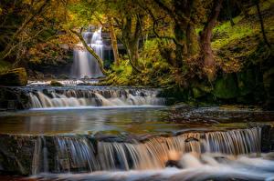 Картинка Англия Осень Водопады Деревьев Мох County Durham Природа