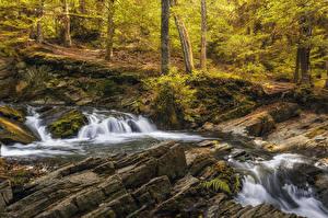 Фотографии Германия Лес Осенние Водопады Мох Alexisbad Природа