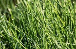 Обои Траве Капельки Зеленые Боке Природа