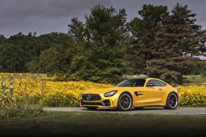 Обои Mercedes-Benz Желтая 2020 AMG GT R Автомобили