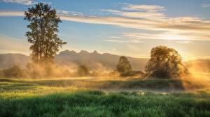 Фотография Утро Деревья Тумане Трава Природа