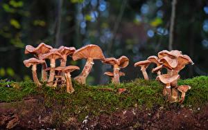 Фотографии Грибы природа Мхом disc fungus