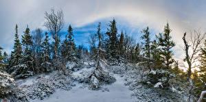 Картинки Норвегия Зимние Снег Деревьев Nord-Trøndelag