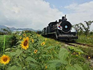 Обои для рабочего стола Южная Корея Поезда Подсолнухи Флага