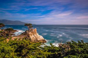 Картинка Америка Океан Побережье Калифорнии Скала Pebble Beach