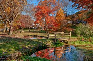 Картинка Америка Парки Осенние Пруд Мост Нью-Йорк Дерева Gerry Park Roslyn Природа