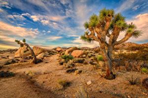 Обои США Парки Камни Небо Калифорния Деревья Joshua Tree National Park