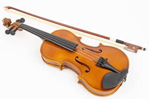Фотография Скрипки Белым фоном Музыка