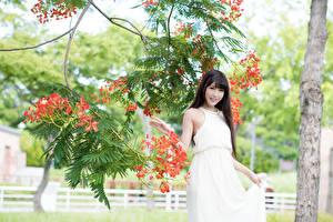 Фото Азиаты Ветвь Брюнетка Платья Улыбка Девушки