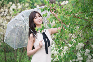 Картинки Азиатки Ветвь Брюнетки Смотрит Рука Зонтом Девушки