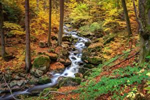 Фотография Осенние Камни Ручеек Лист Мох Природа