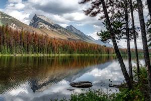 Картинка Канада Гора Озеро Дерево Honeymoon Lake, Alberta Природа
